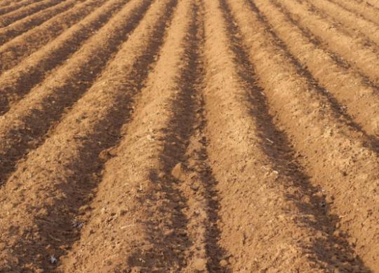 gleba brunatna