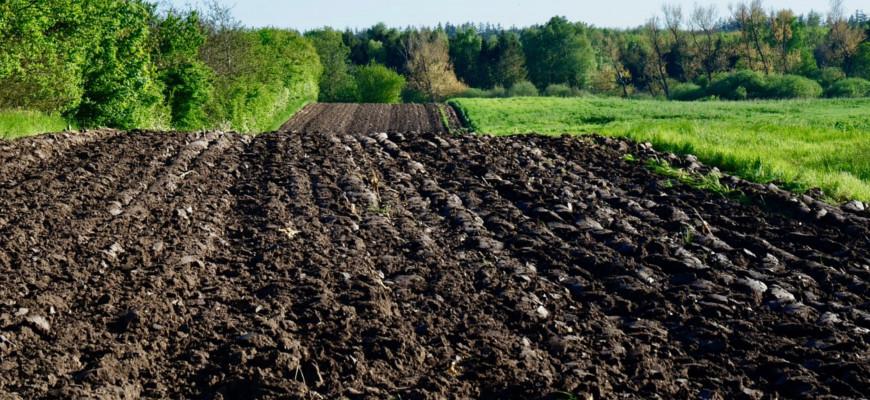 rekultywacja gleb