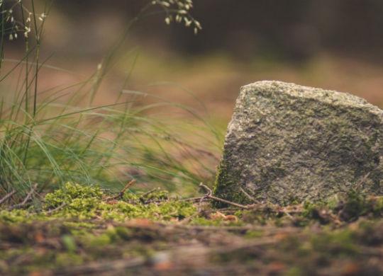 Charakterystyka gleb bielicowych