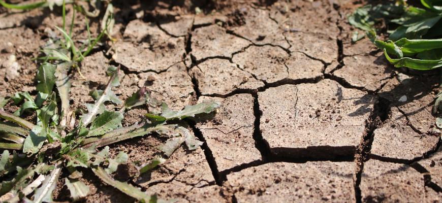 Gleba z zanieczyszczeniami